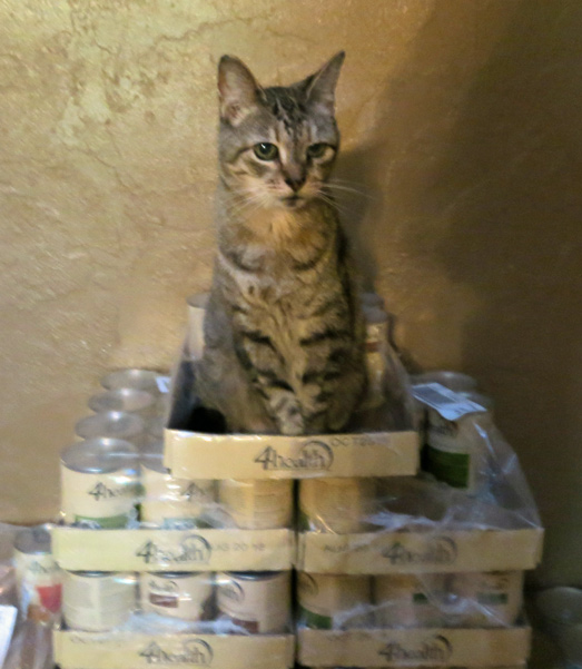 Angel sitting on a mountain of cat food cans