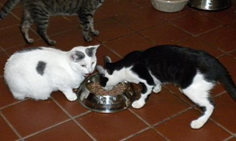 Cookie and her son Oreo eating from a bowl