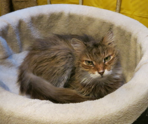 Foxy Lady in the big cat bed