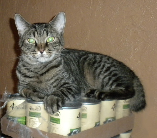 Manxi on top of the cans of cat food