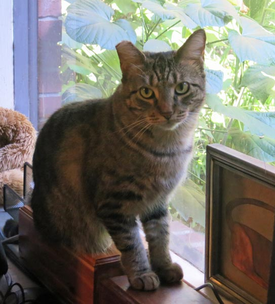Minnie sitting in the window of the computer room